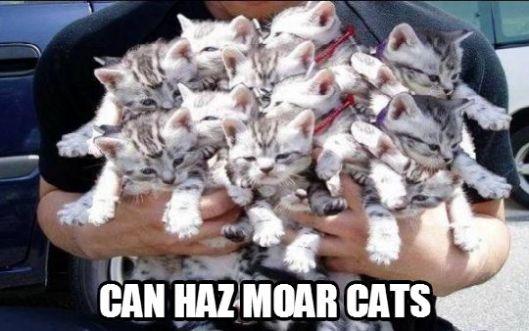 Moar Cats Plz